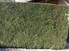 Plants-Hedges_Photo_Texture_B_P1259963