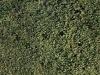 Plants-Hedges_Photo_Texture_B_P1259964