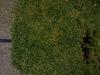 Plants-Hedges_Photo_Texture_B_P3011020