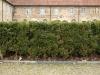 Plants-Hedges_Photo_Texture_B_P3011022