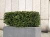 Plants-Hedges_Photo_Texture_B_P4041491