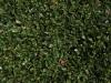 Plants-Hedges_Photo_Texture_B_P4041495