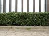 Plants-Hedges_Photo_Texture_B_P4041498