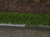 Plants-Hedges_Photo_Texture_B_P4222561