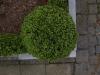 Plants-Hedges_Photo_Texture_B_P4222565