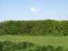Plants-Hedges_Photo_Texture_B_P5032305