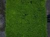 Plants-Hedges_Photo_Texture_B_P6137318