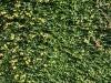 Plants-Hedges_Photo_Texture_B_P6153419