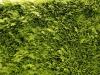 Plants-Hedges_Photo_Texture_B_P6213543
