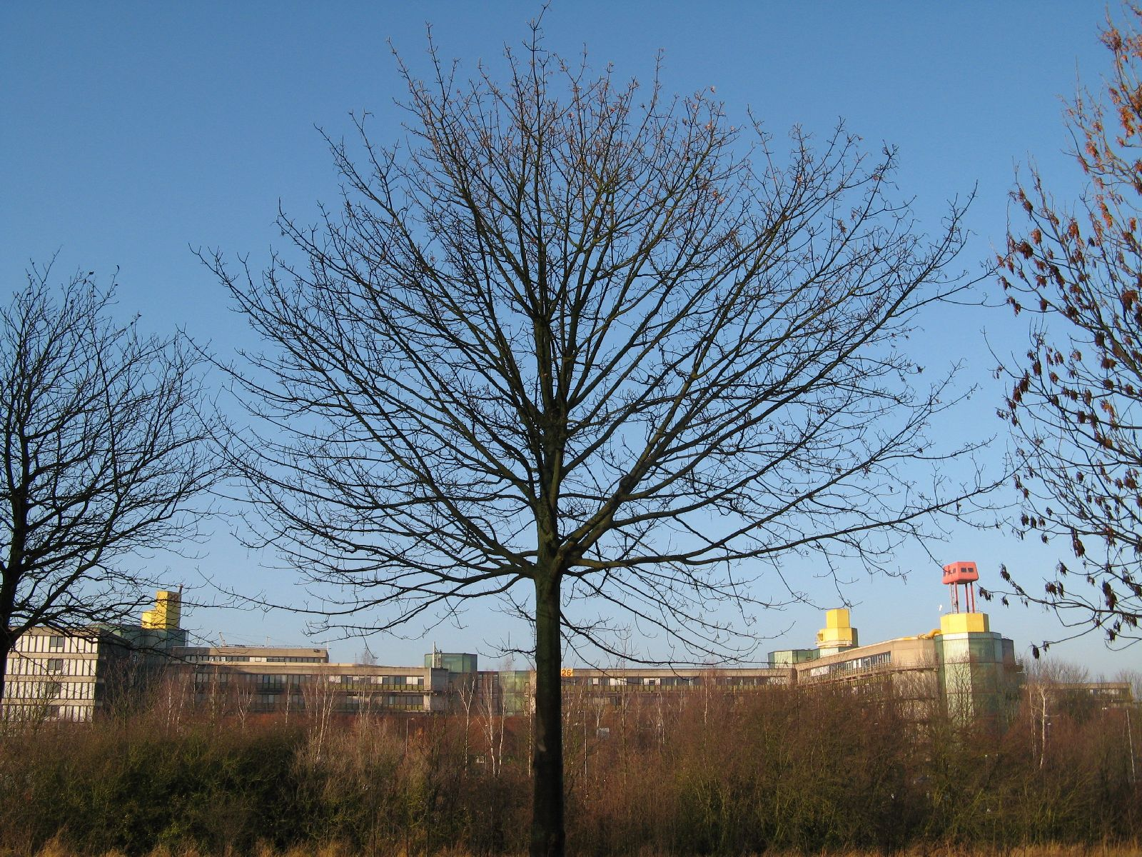 Plants-Trees_Photo_Texture_B_12340