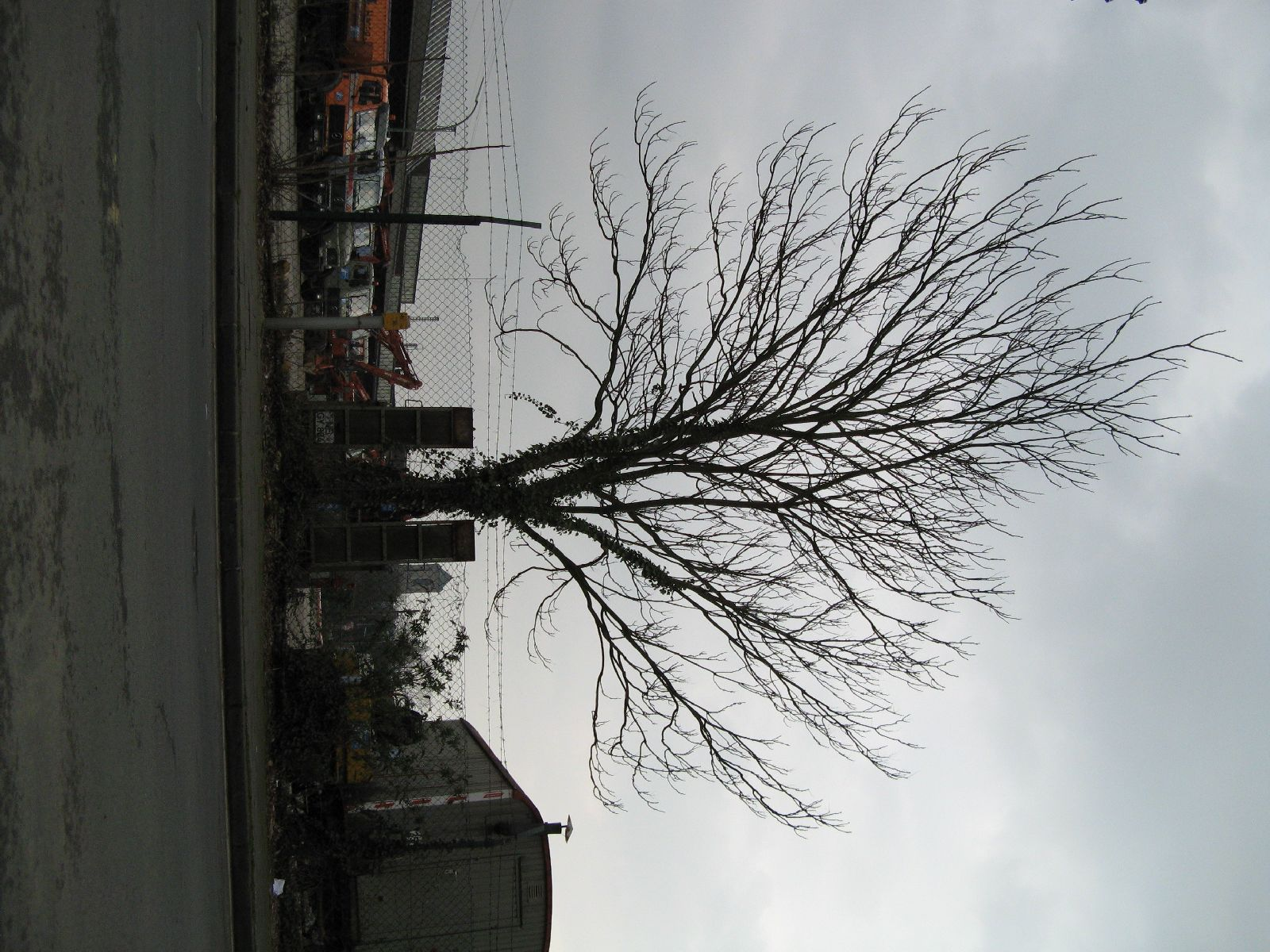 Plants-Trees_Photo_Texture_B_43000