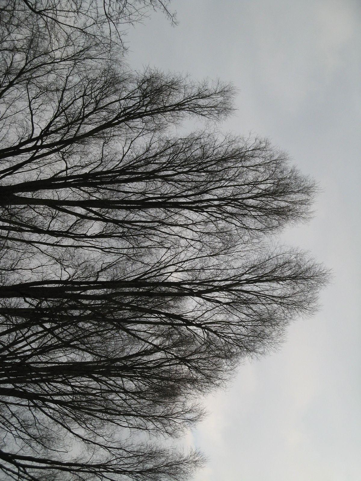 Plants-Trees_Photo_Texture_B_43140