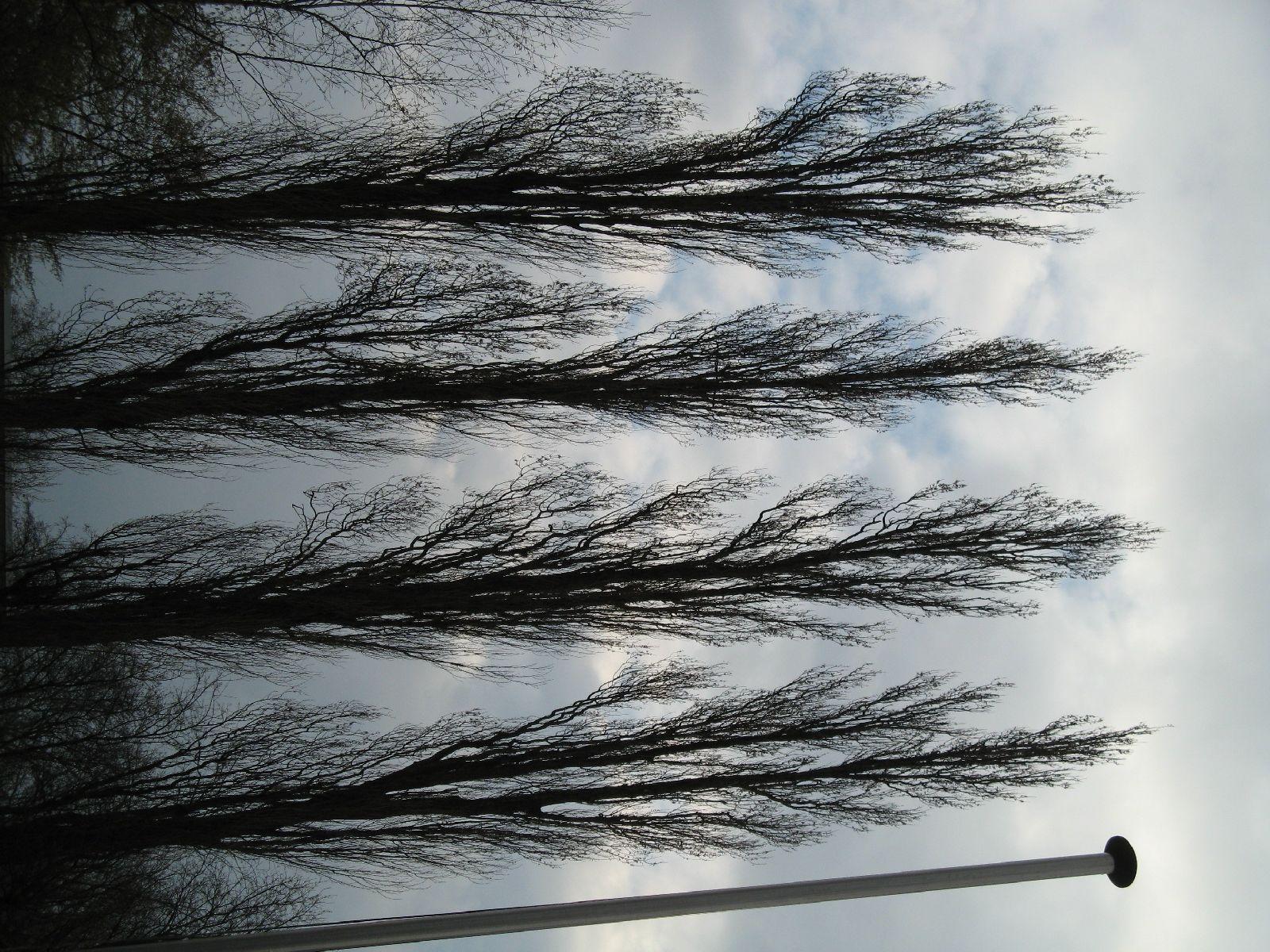 Plants-Trees_Photo_Texture_B_43160