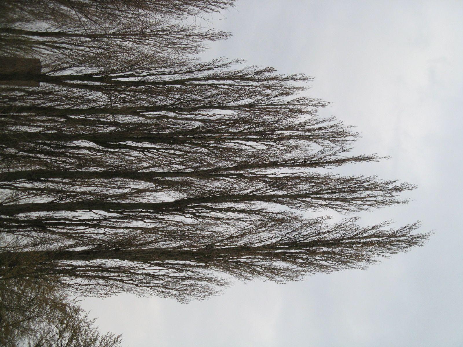 Plants-Trees_Photo_Texture_B_43220