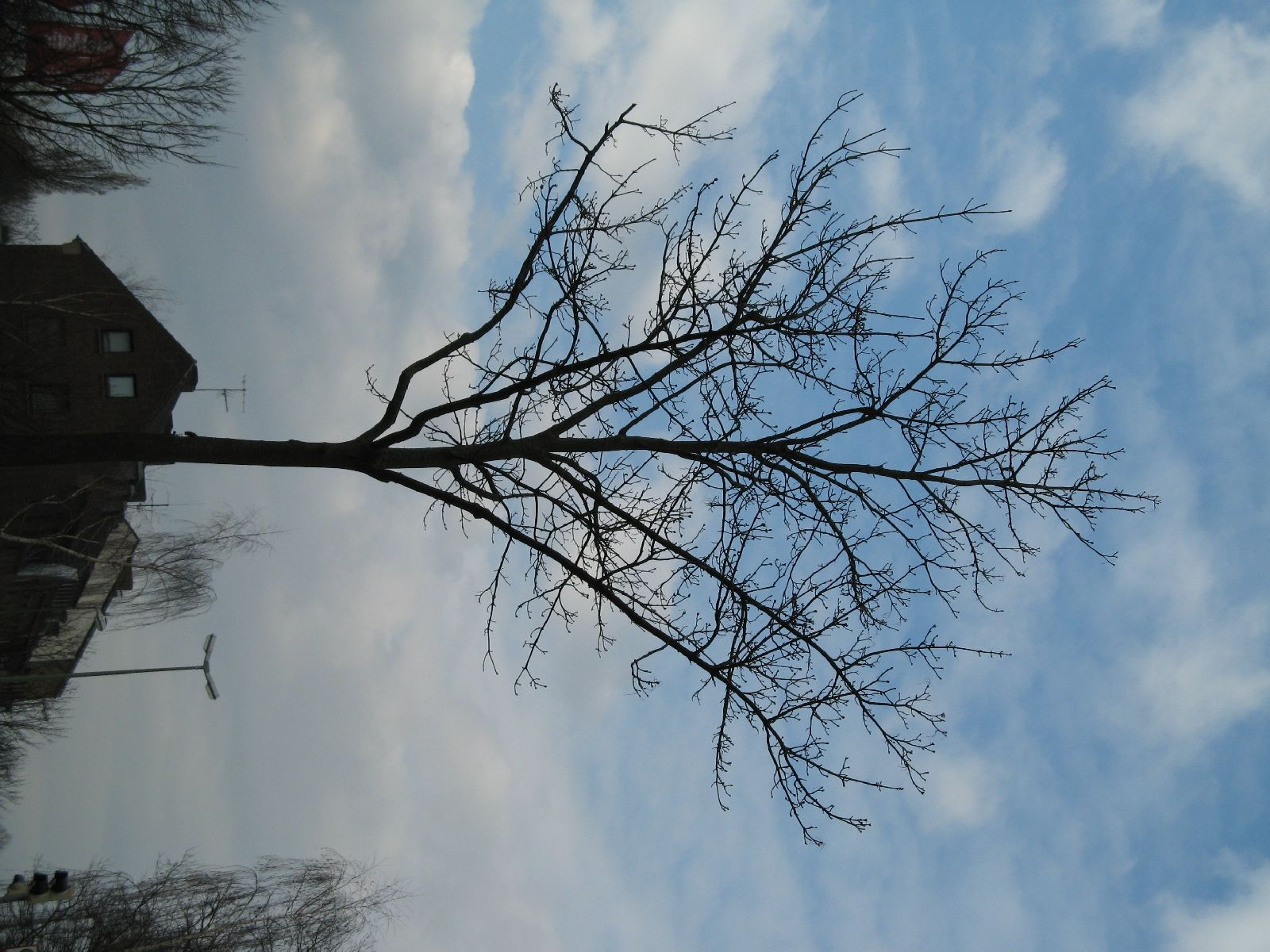 Plants-Trees_Photo_Texture_B_43230