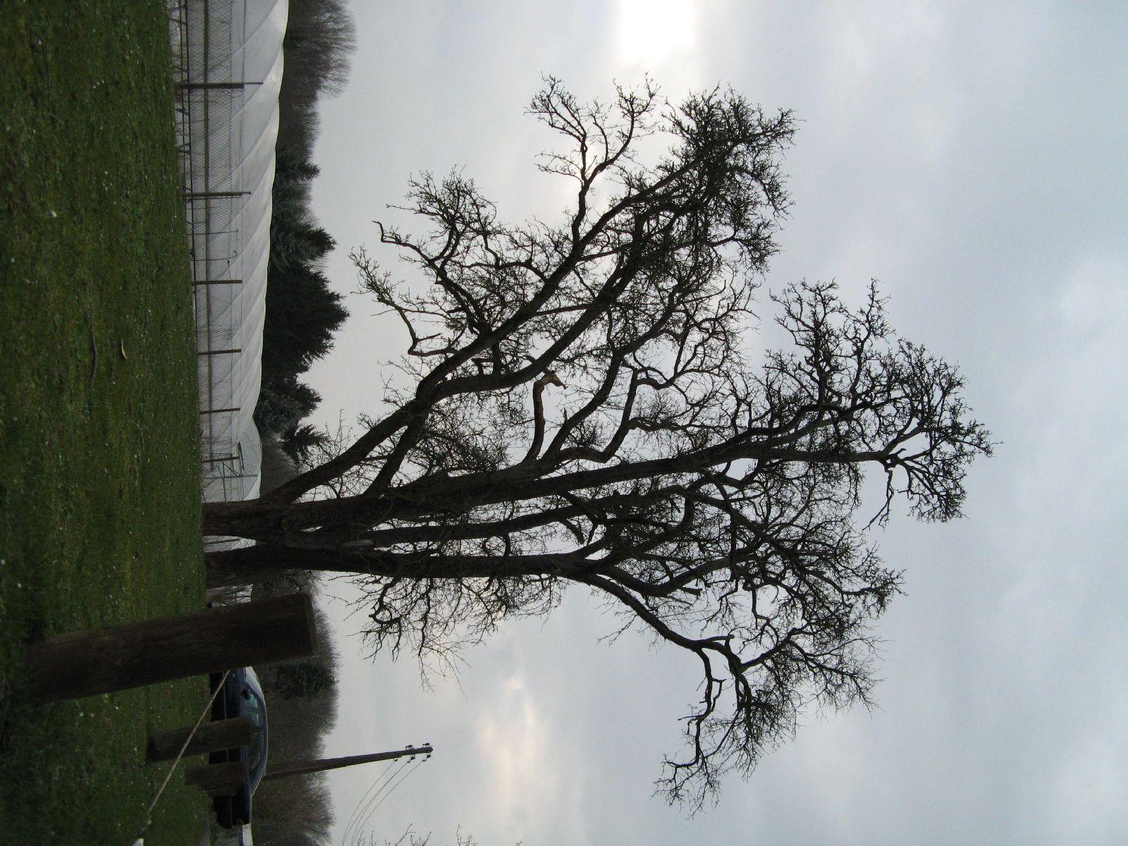Plants-Trees_Photo_Texture_B_43380