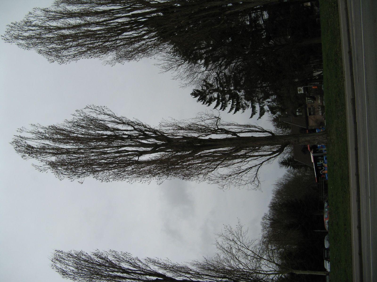 Plants-Trees_Photo_Texture_B_5691