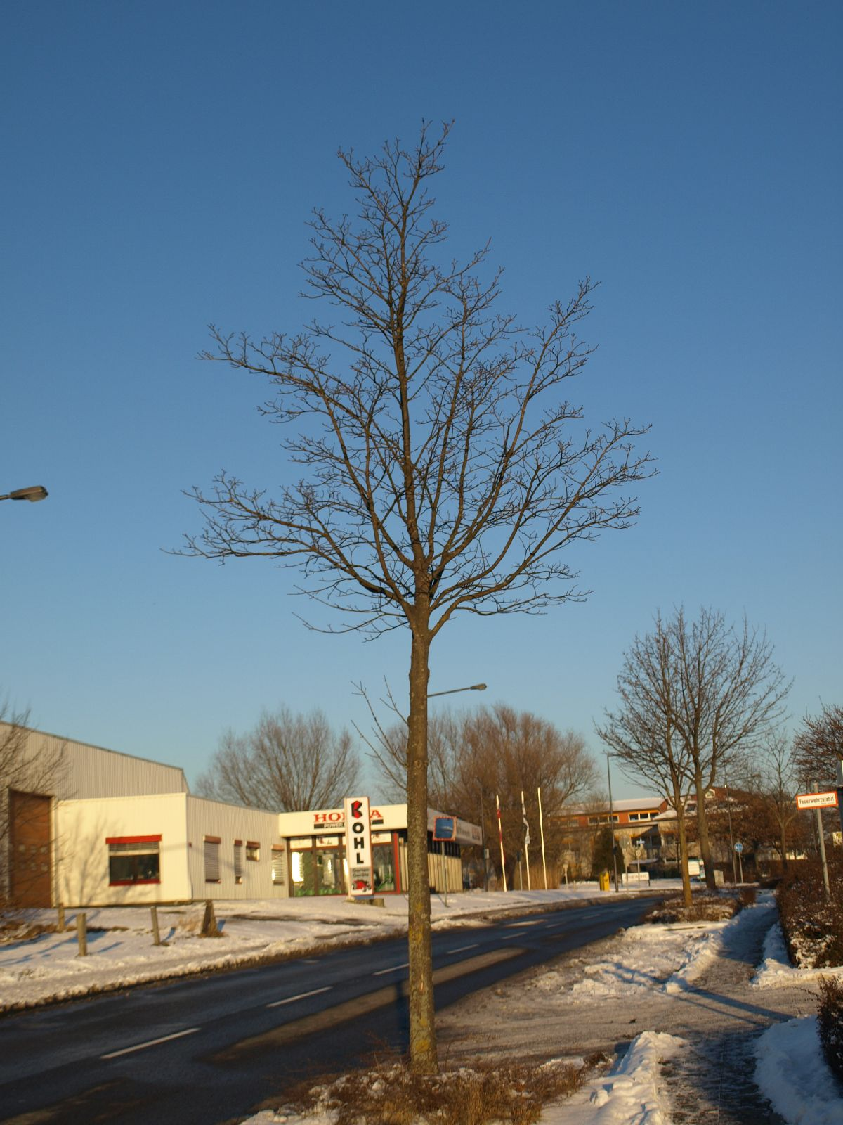 Plants-Trees_Photo_Texture_B_P1109026