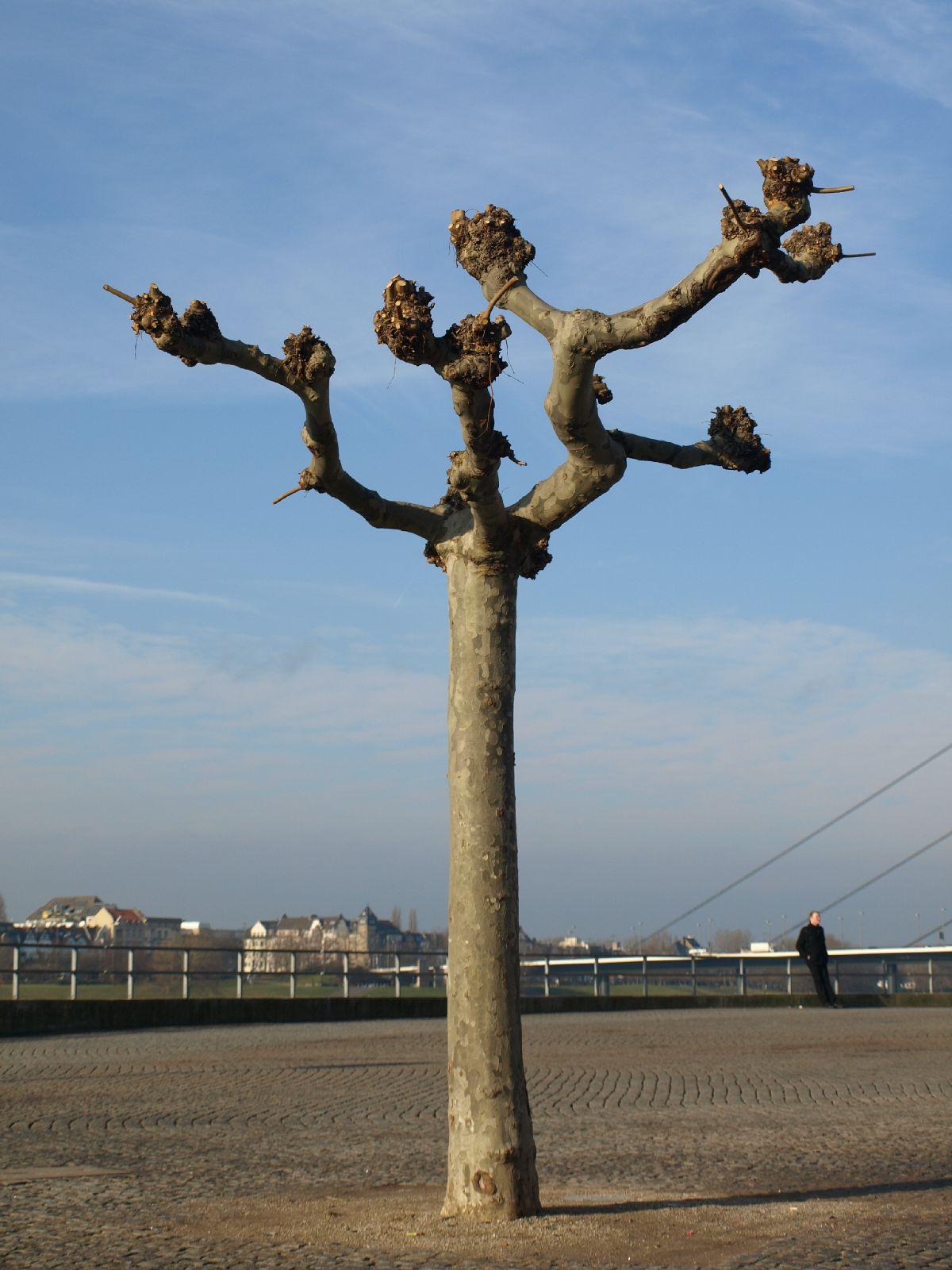 Plants-Trees_Photo_Texture_B_P1179328