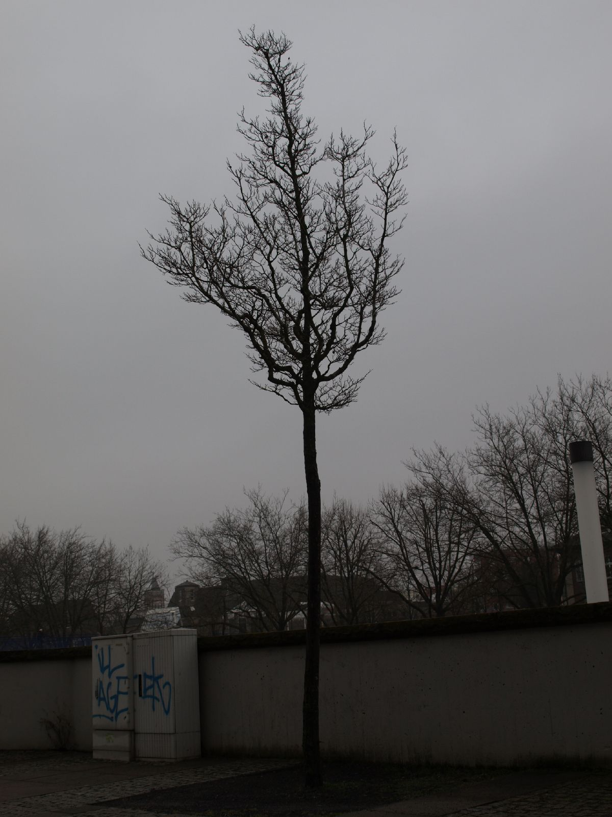 Plants-Trees_Photo_Texture_B_P2280898