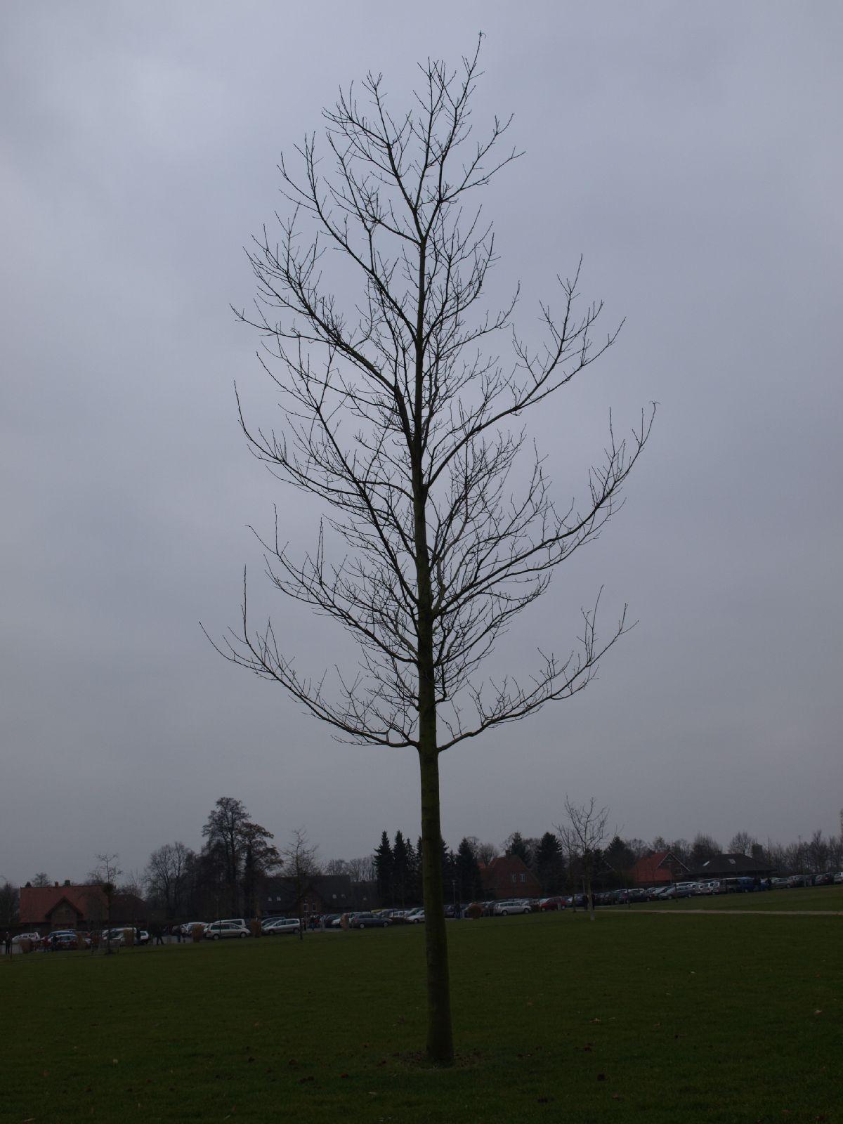 Plants-Trees_Photo_Texture_B_P3011031
