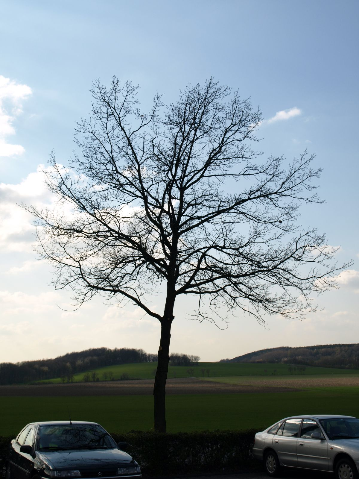 Plants-Trees_Photo_Texture_B_P4171328