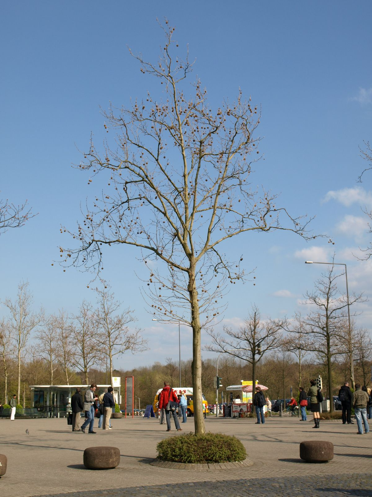 Plants-Trees_Photo_Texture_B_P4171345