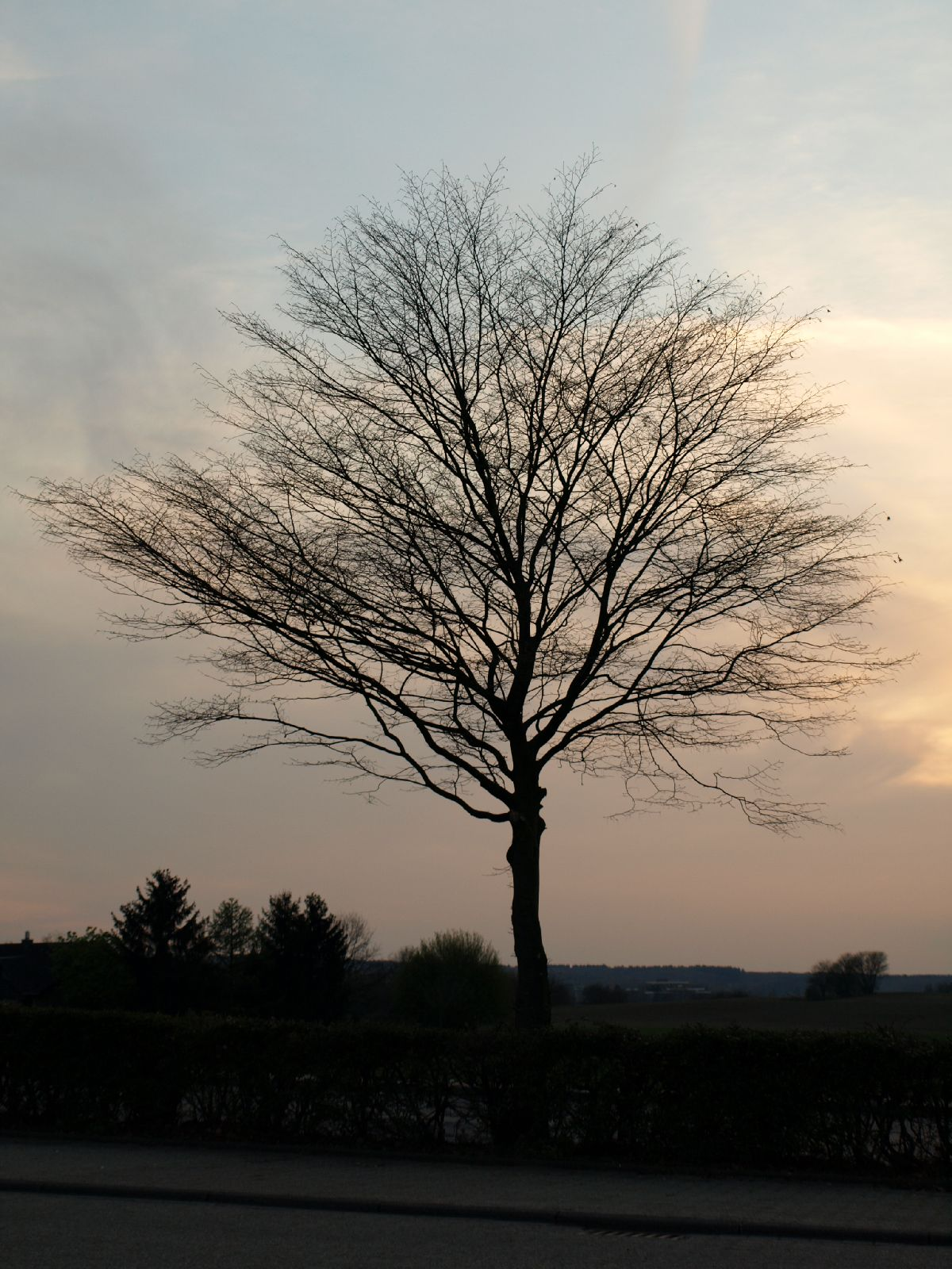 Plants-Trees_Photo_Texture_B_P4171367