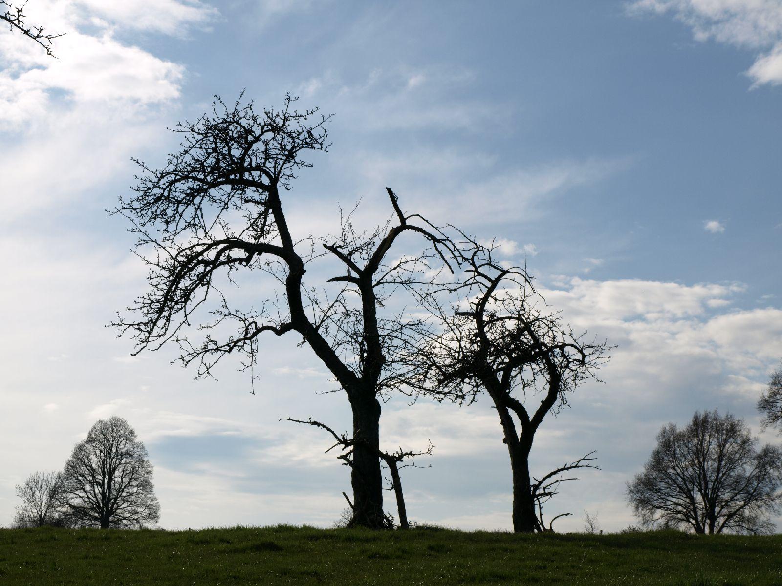 Plants-Trees_Photo_Texture_B_P4201546