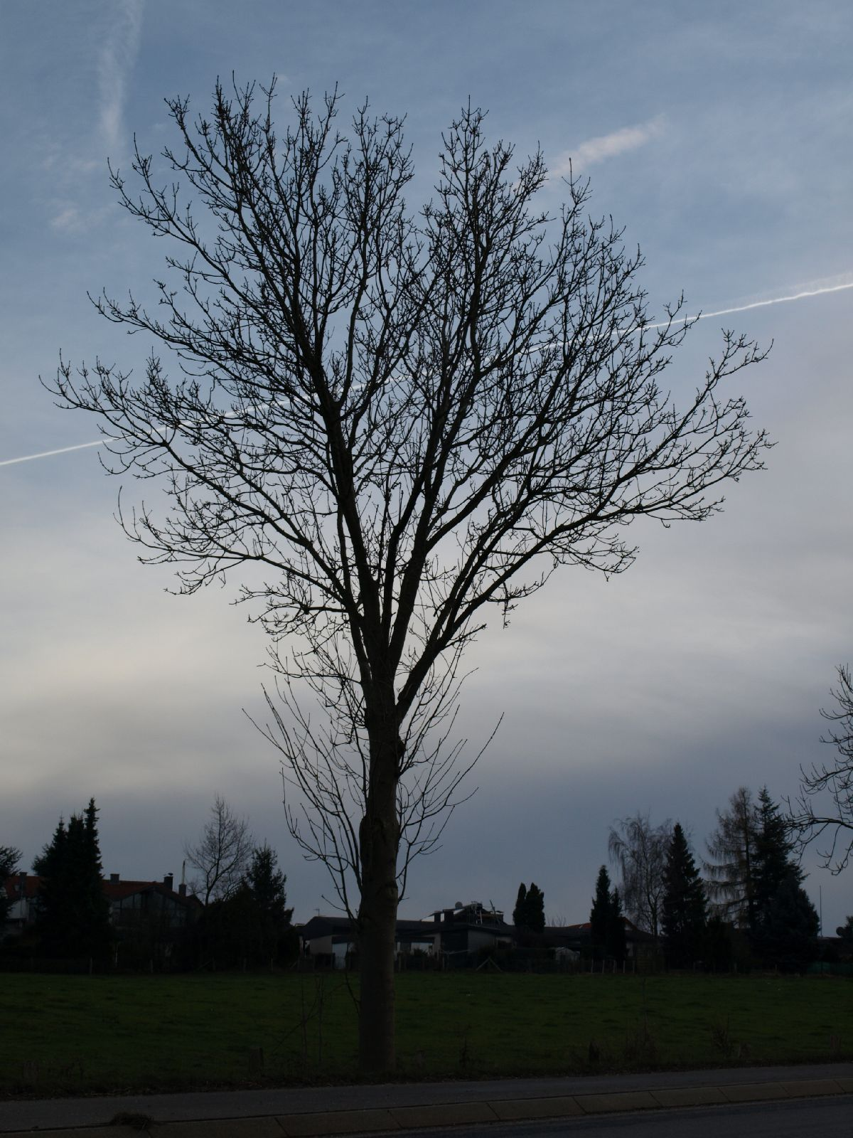 Plants-Trees_Photo_Texture_B_PC147687