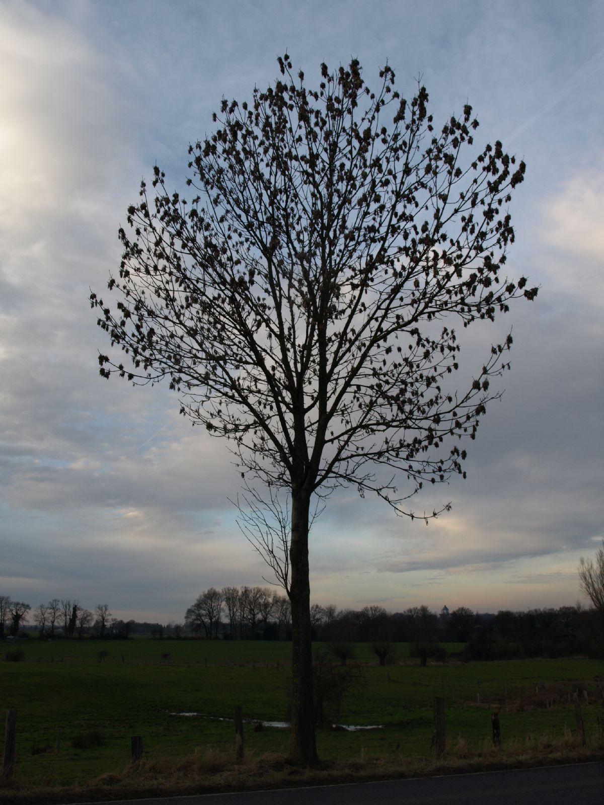 Plants-Trees_Photo_Texture_B_PC147692