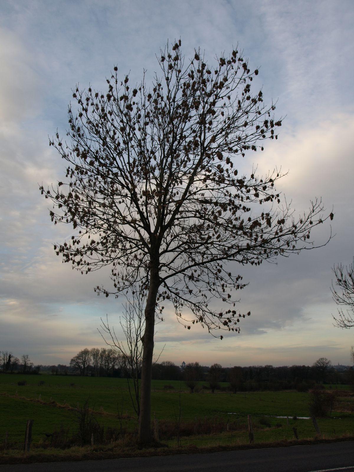 Plants-Trees_Photo_Texture_B_PC147695