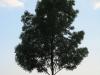 Plants-Trees_Photo_Texture_B_03440