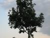 Plants-Trees_Photo_Texture_B_03450