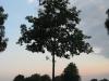 Plants-Trees_Photo_Texture_B_03460