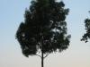 Plants-Trees_Photo_Texture_B_03470