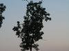 Plants-Trees_Photo_Texture_B_03480