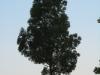 Plants-Trees_Photo_Texture_B_03490