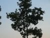 Plants-Trees_Photo_Texture_B_03500