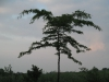 Plants-Trees_Photo_Texture_B_03510