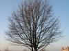 Plants-Trees_Photo_Texture_B_11990