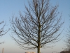 Plants-Trees_Photo_Texture_B_12030