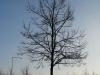 Plants-Trees_Photo_Texture_B_12120