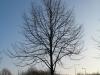 Plants-Trees_Photo_Texture_B_12140