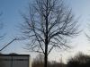 Plants-Trees_Photo_Texture_B_12150