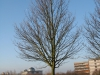 Plants-Trees_Photo_Texture_B_12210