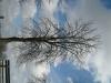 Plants-Trees_Photo_Texture_B_41080