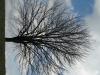 Plants-Trees_Photo_Texture_B_41120