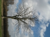 Plants-Trees_Photo_Texture_B_41130