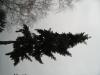 Plants-Trees_Photo_Texture_B_43010